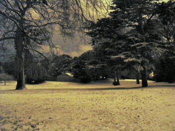 Picture of a snowed under park