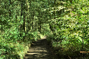 Picture of a path through woodland