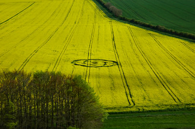 Picture of a crop circle in a rape seed field