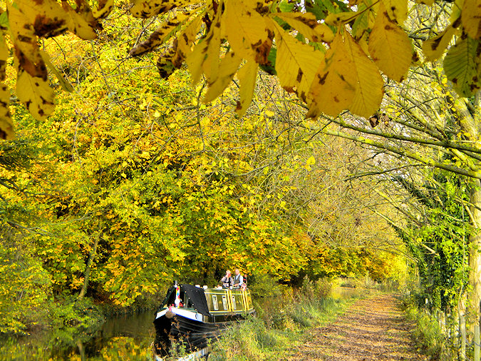 Picture of a canal boat travelling under trees in their autumn colours